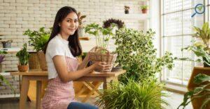 affordable-indoor-plants